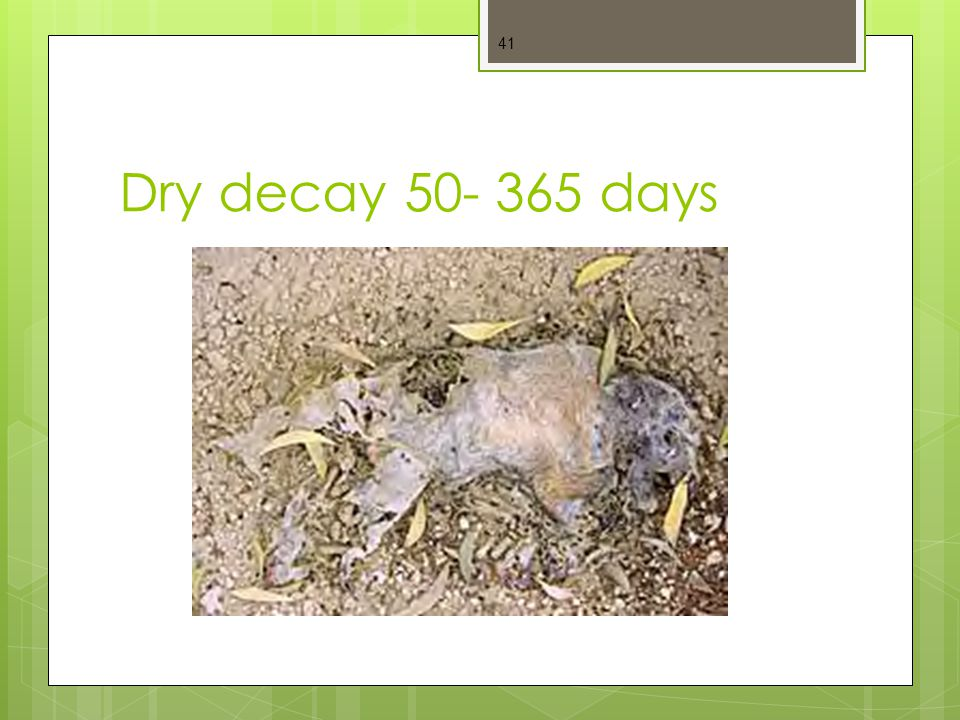 Dry decay 50- 365 days