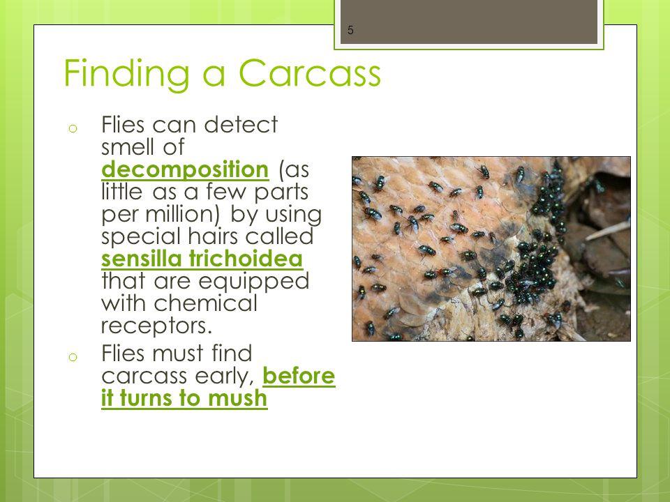Finding a Carcass