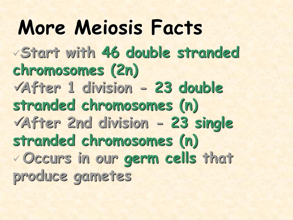 More Meiosis Facts Start with 46 double stranded chromosomes (2n) After 1 division - 23 double stranded chromosomes (n)