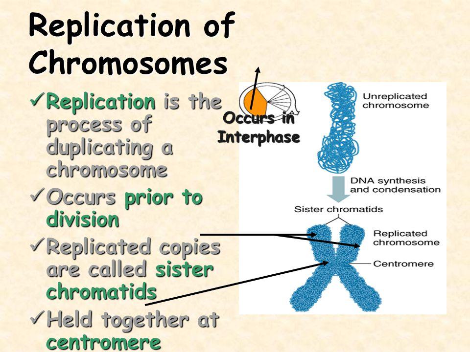 Replication of Chromosomes