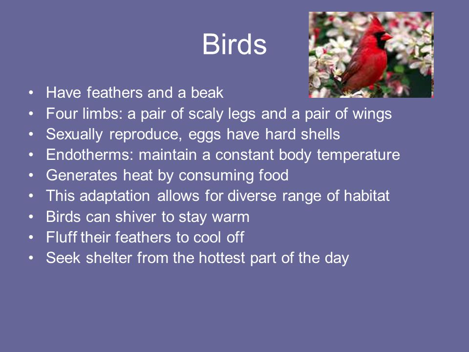 Birds Have feathers and a beak