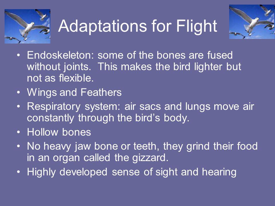 Adaptations for Flight