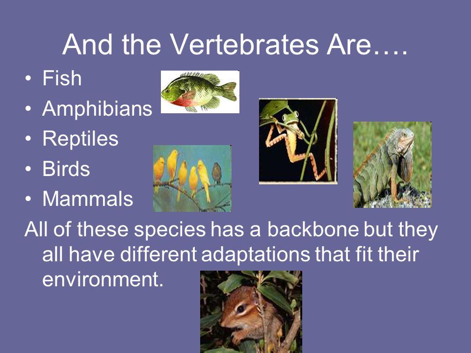 And the Vertebrates Are….