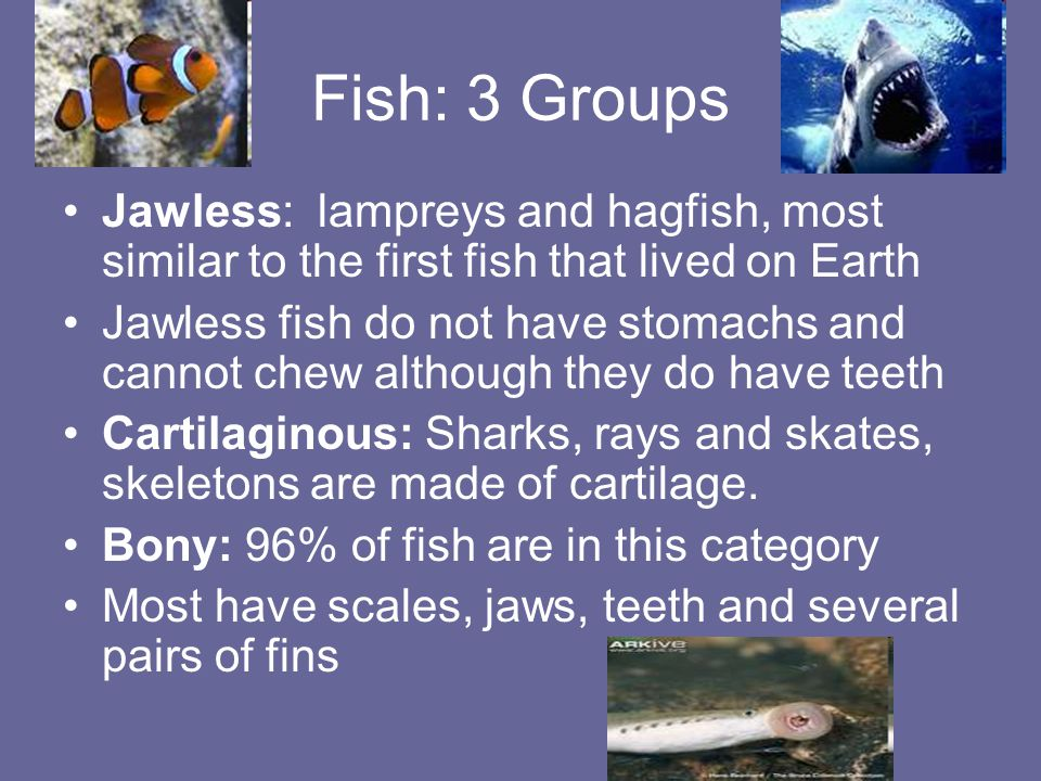 Fish: 3 Groups Jawless: lampreys and hagfish, most similar to the first fish that lived on Earth.