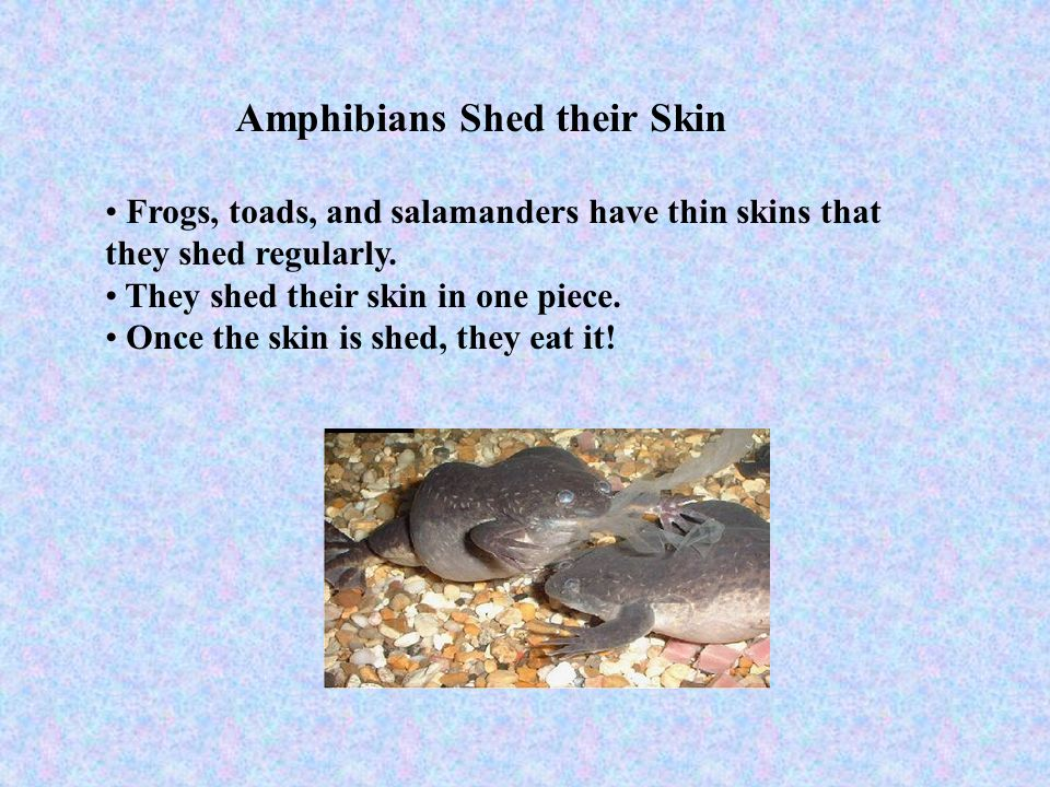Amphibians Shed their Skin