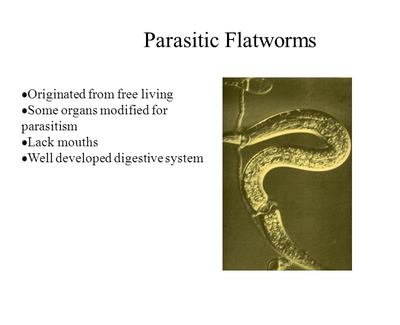 Parasitic Flatworms Originated from free living