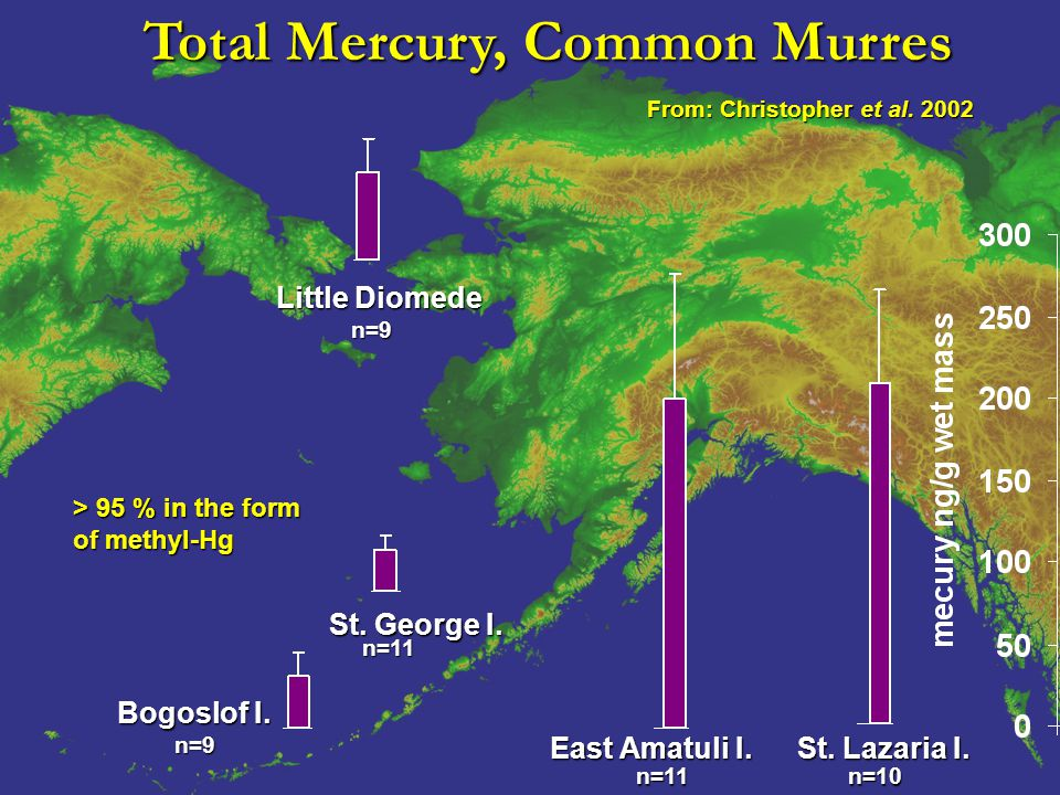 Total Mercury, Common Murres