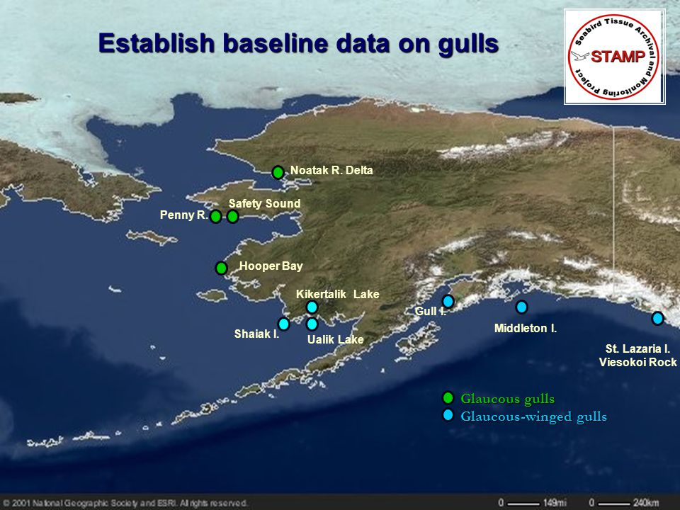 Establish baseline data on gulls