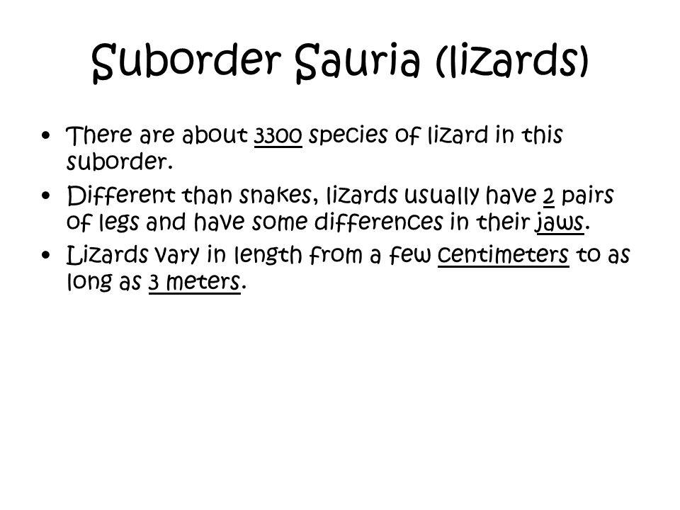 Suborder Sauria (lizards)