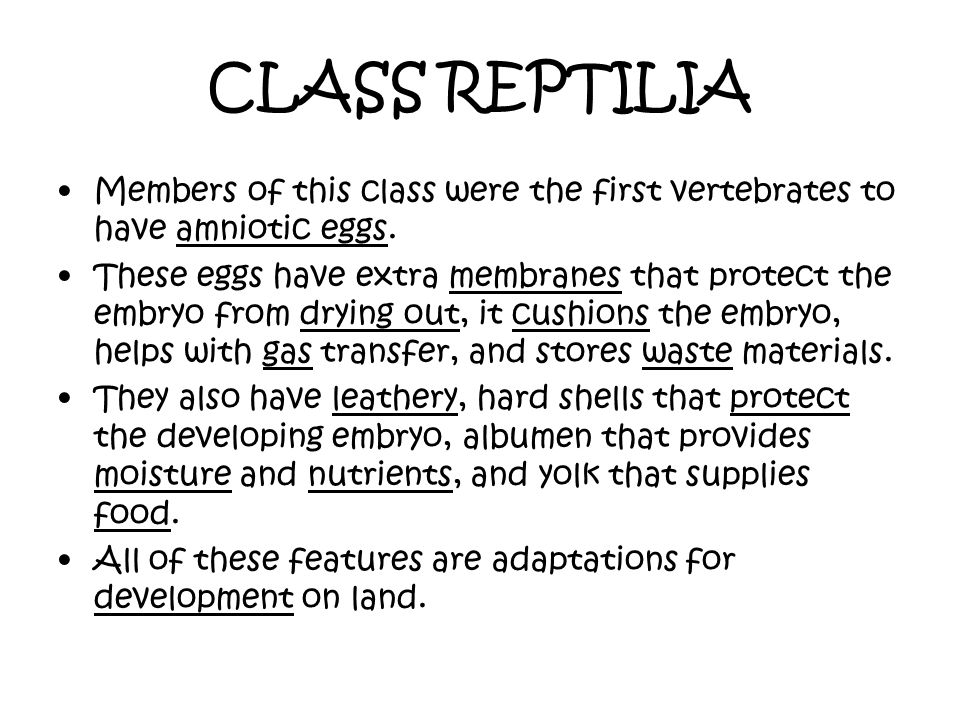 CLASS REPTILIA Members of this class were the first vertebrates to have amniotic eggs.
