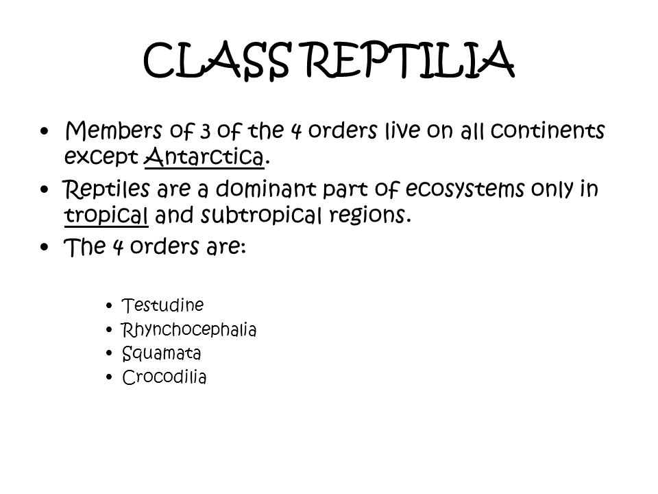 CLASS REPTILIA Members of 3 of the 4 orders live on all continents except Antarctica.