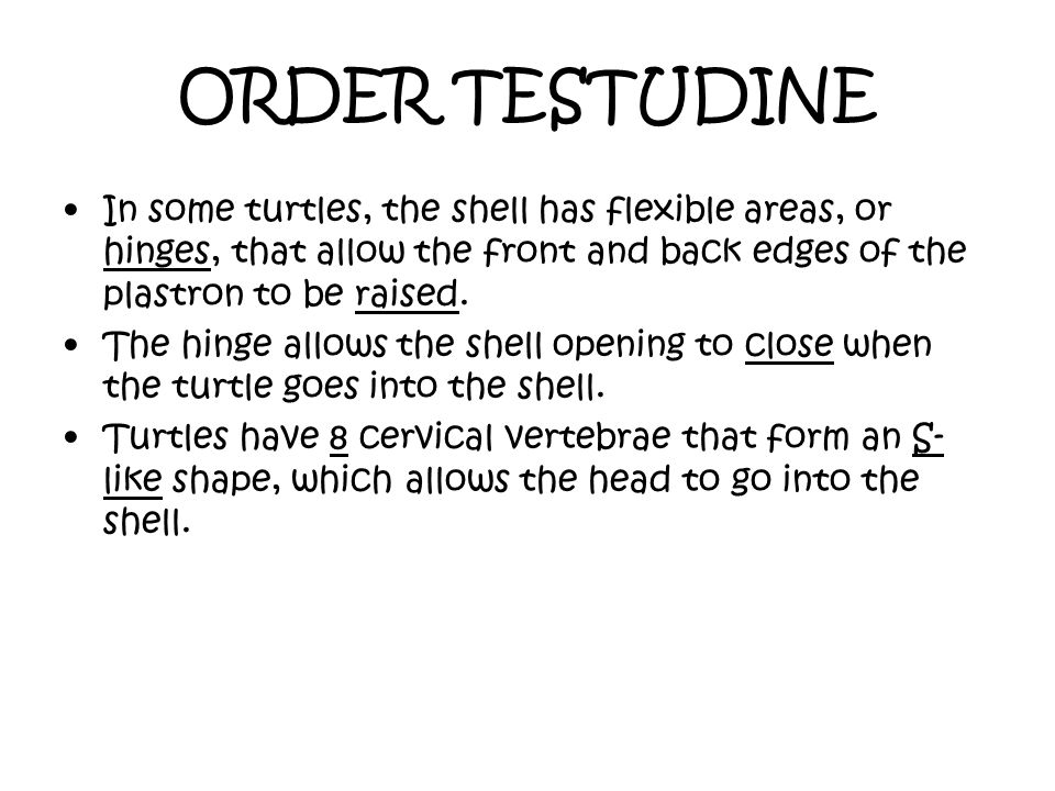 ORDER TESTUDINE In some turtles, the shell has flexible areas, or hinges, that allow the front and back edges of the plastron to be raised.