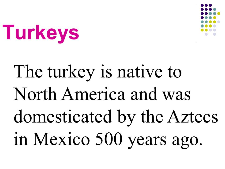 Turkeys The turkey is native to North America and was domesticated by the Aztecs in Mexico 500 years ago.