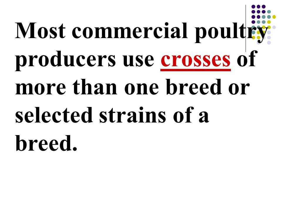 Most commercial poultry producers use crosses of more than one breed or