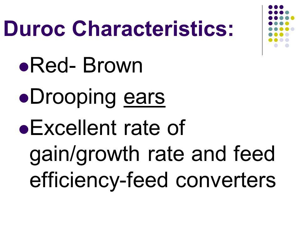 Duroc Characteristics: