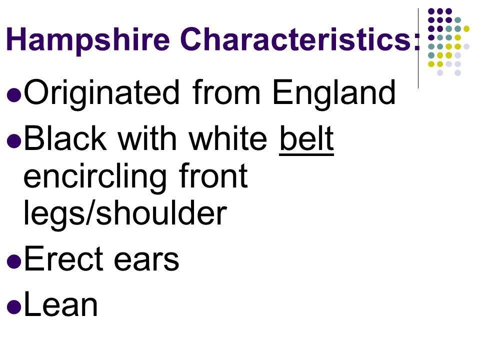 Hampshire Characteristics: