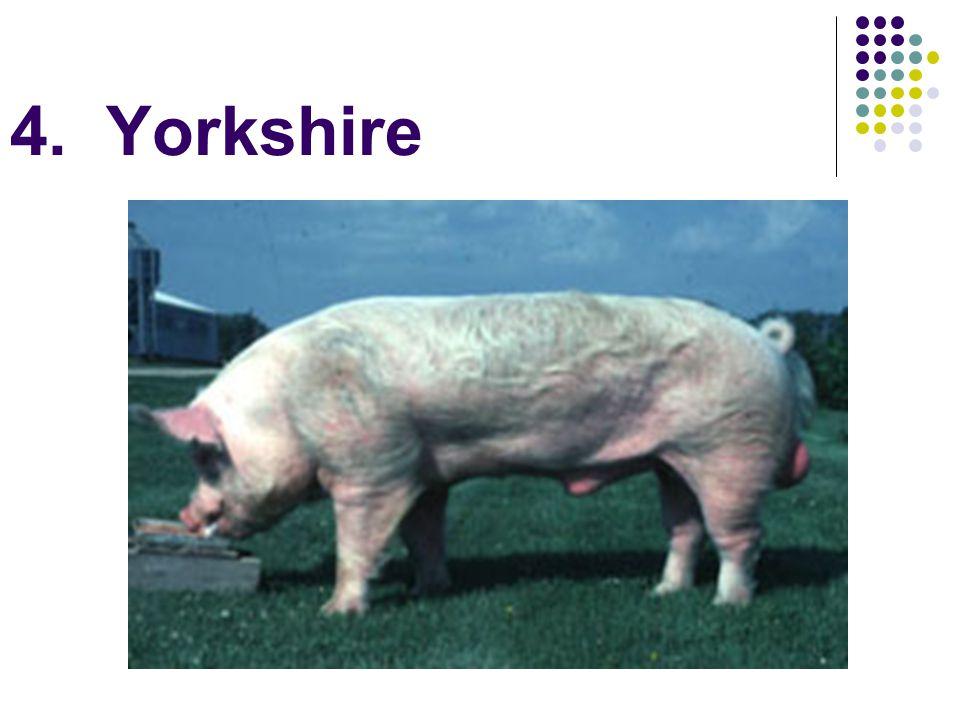4. Yorkshire