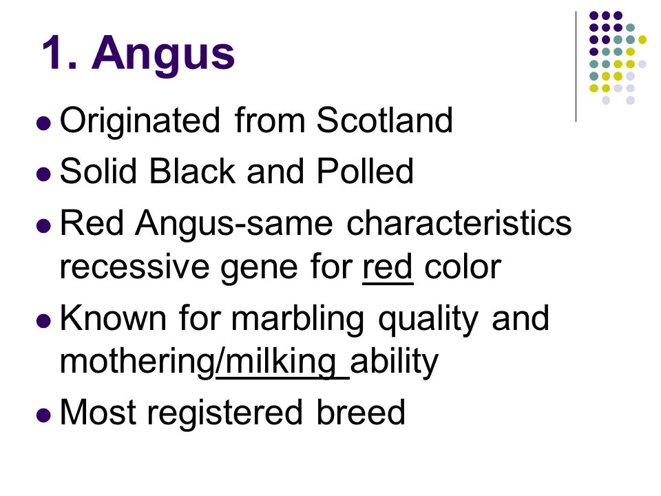 1. Angus Originated from Scotland Solid Black and Polled