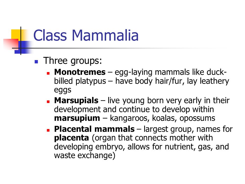 Class Mammalia Three groups:
