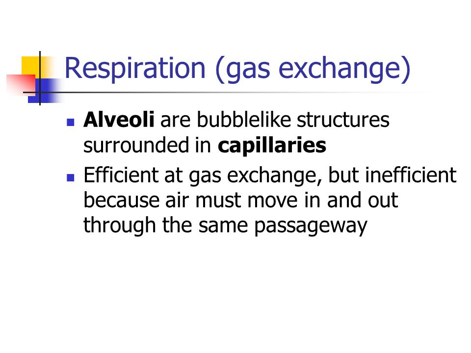 Respiration (gas exchange)