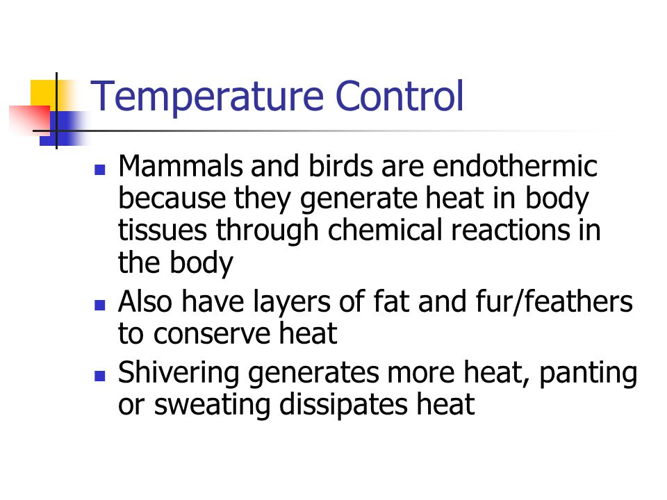 Temperature Control Mammals and birds are endothermic because they generate heat in body tissues through chemical reactions in the body.