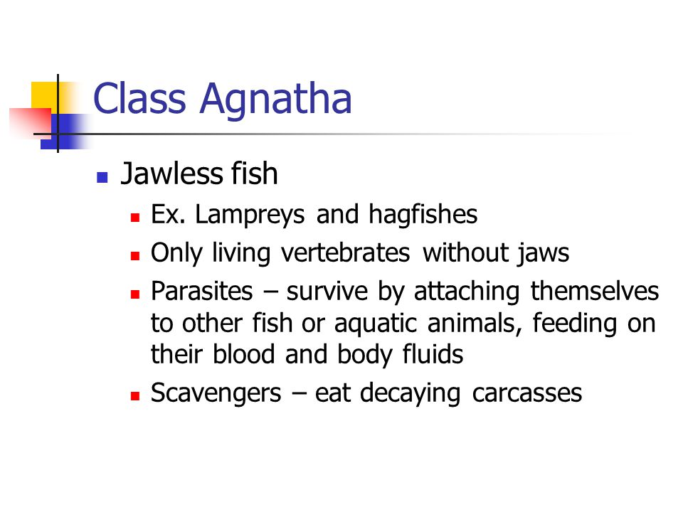 Class Agnatha Jawless fish Ex. Lampreys and hagfishes