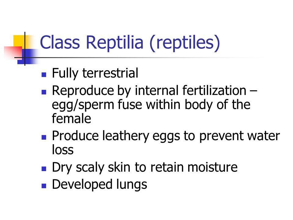 Class Reptilia (reptiles)