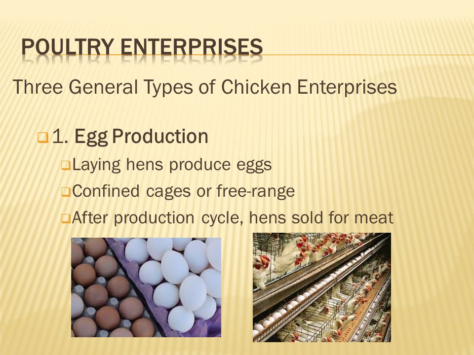 Poultry Enterprises Three General Types of Chicken Enterprises