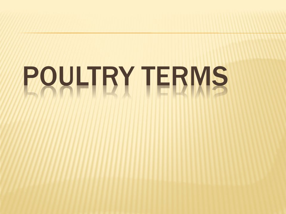 Poultry Terms