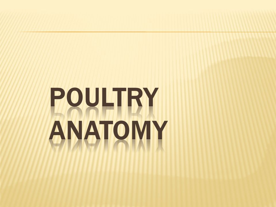 POULTRY ANATOMY