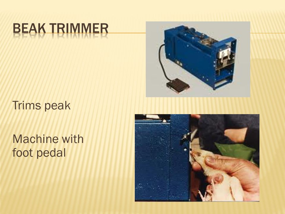Beak Trimmer Trims peak Machine with foot pedal