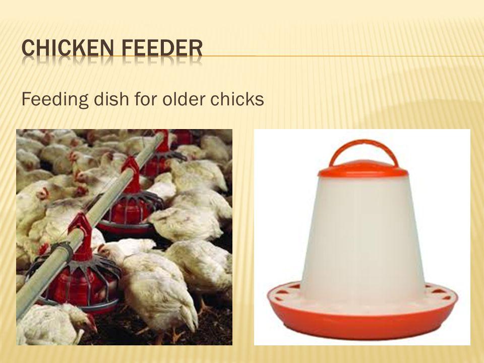 Chicken Feeder Feeding dish for older chicks