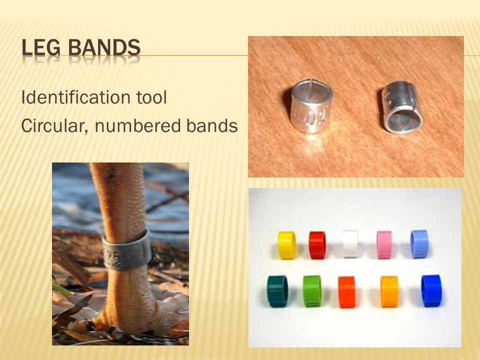 Leg Bands Identification tool Circular, numbered bands