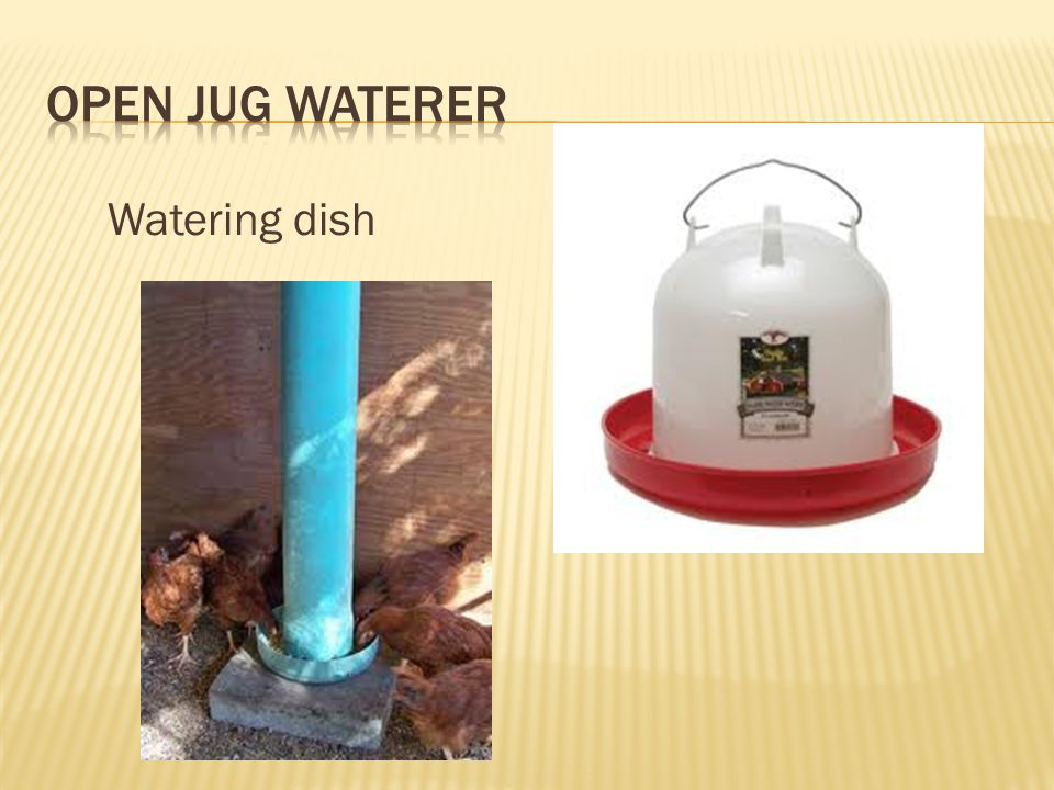 Open Jug Waterer Watering dish