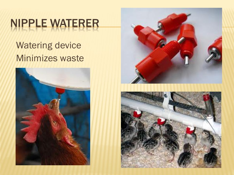 Nipple Waterer Watering device Minimizes waste