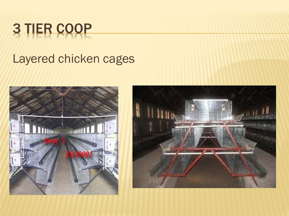 3 Tier Coop Layered chicken cages