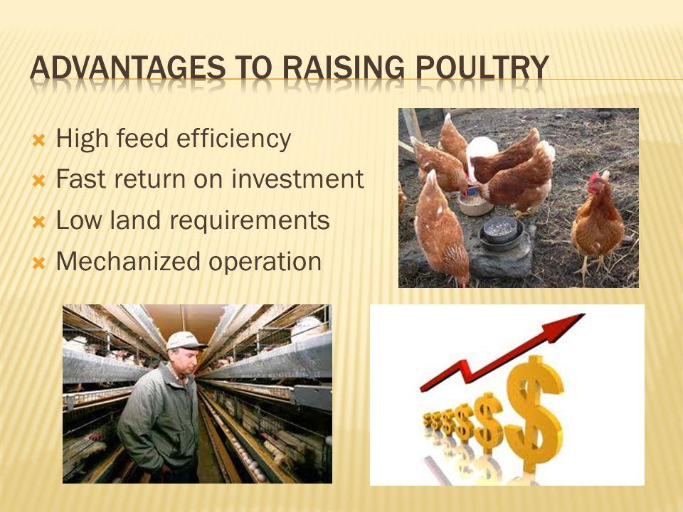 Advantages to raising poultry