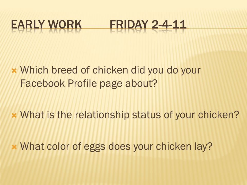 Early Work Friday 2-4-11 Which breed of chicken did you do your Facebook Profile page about What is the relationship status of your chicken