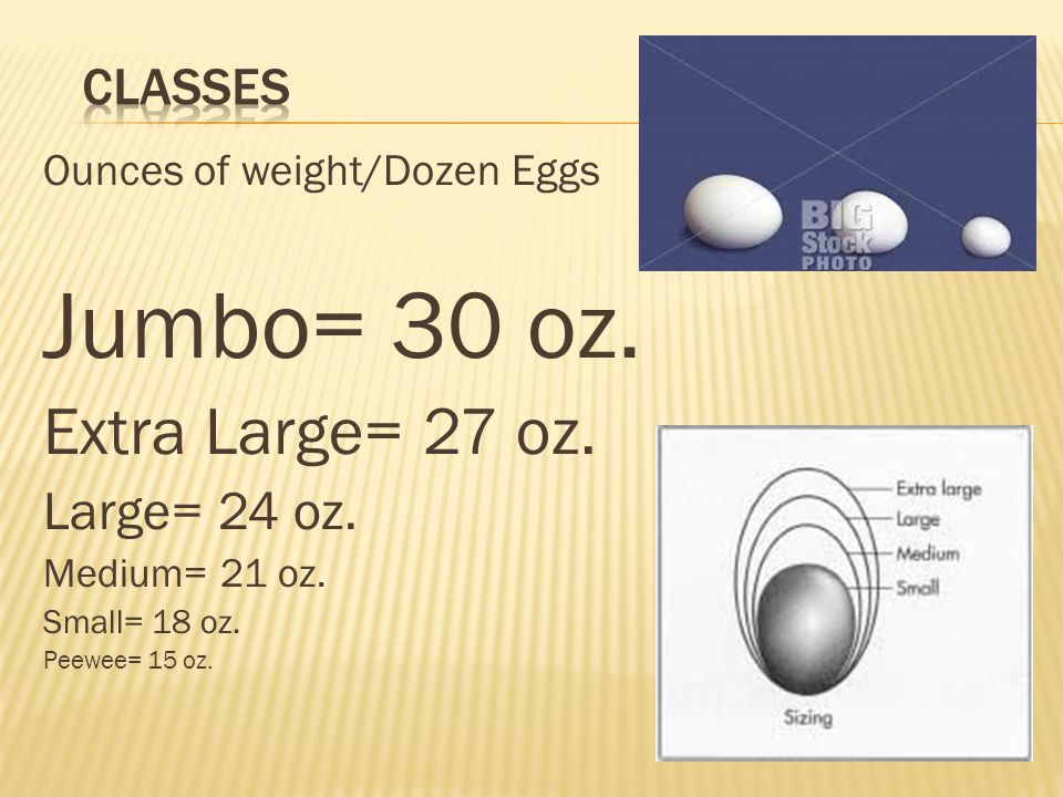 Jumbo= 30 oz. Extra Large= 27 oz. Large= 24 oz. Classes
