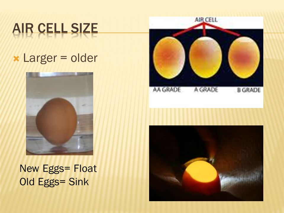 Air Cell Size Larger = older New Eggs= Float Old Eggs= Sink