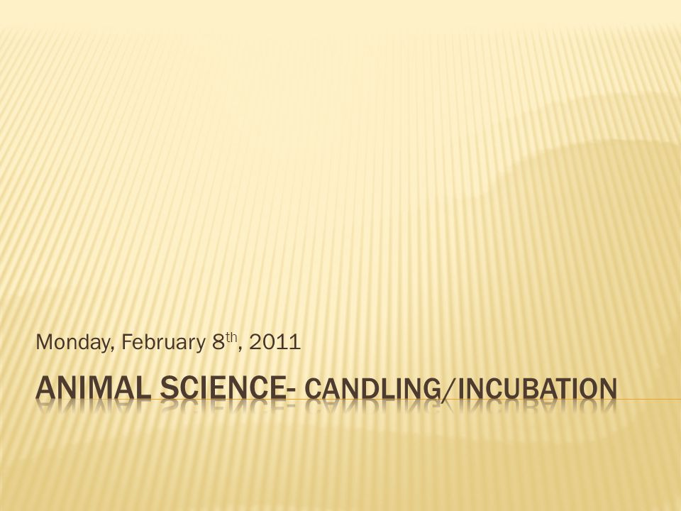Animal Science- Candling/INcubation