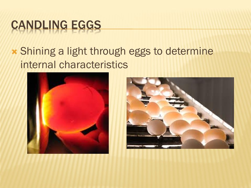 Candling Eggs Shining a light through eggs to determine internal characteristics