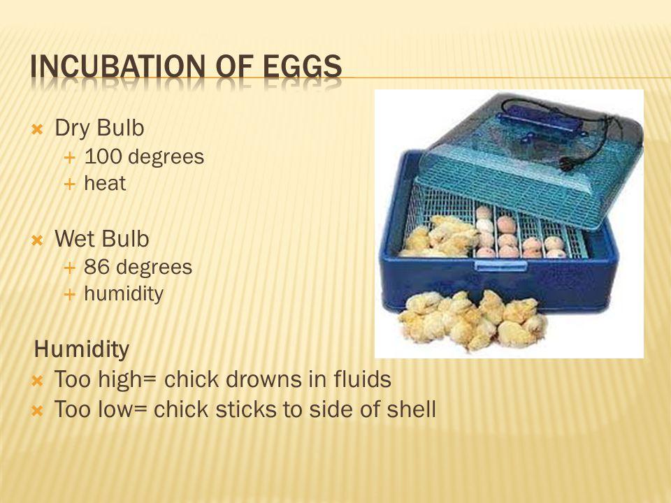 Incubation of Eggs Dry Bulb Wet Bulb Humidity
