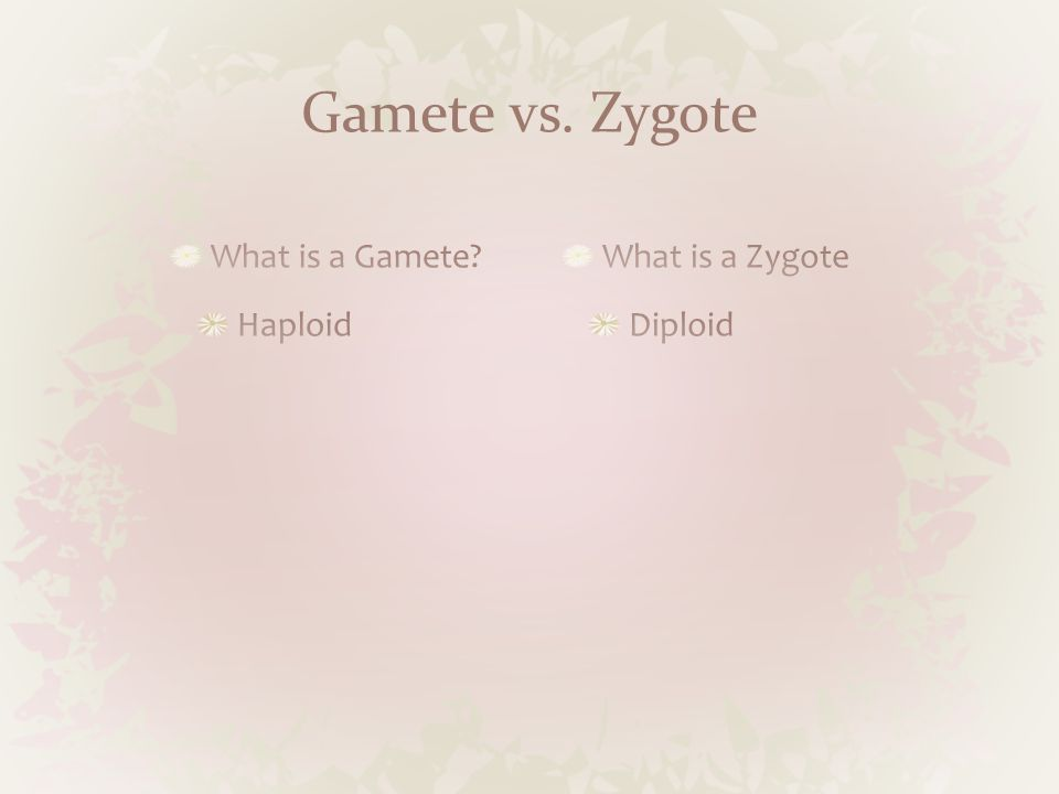 Gamete vs. Zygote What is a Gamete Haploid What is a Zygote Diploid