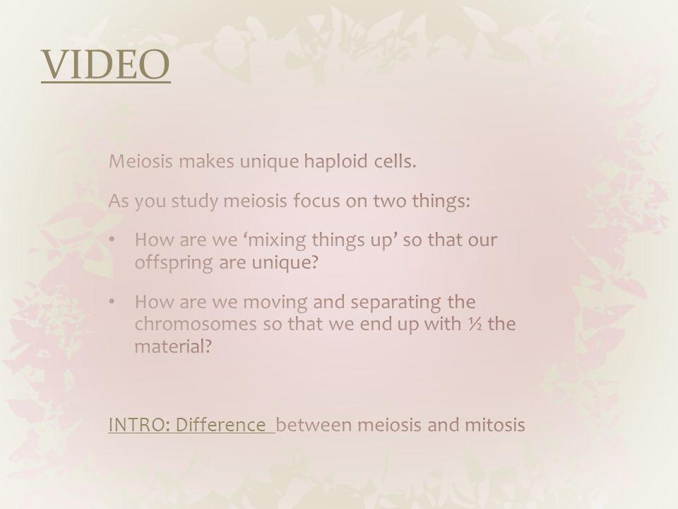 VIDEO Meiosis makes unique haploid cells.