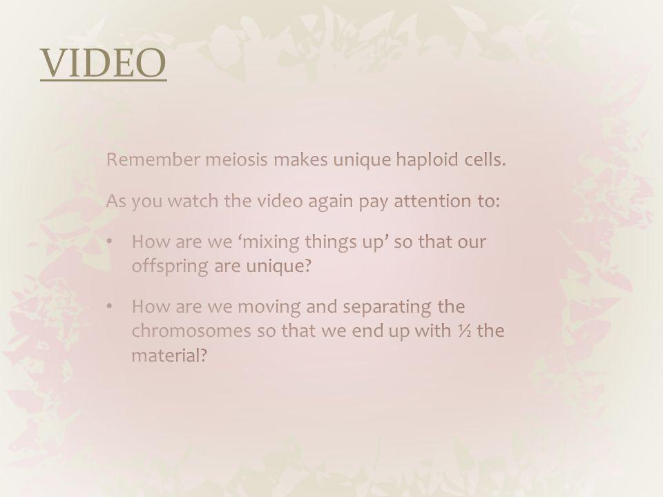 VIDEO Remember meiosis makes unique haploid cells.