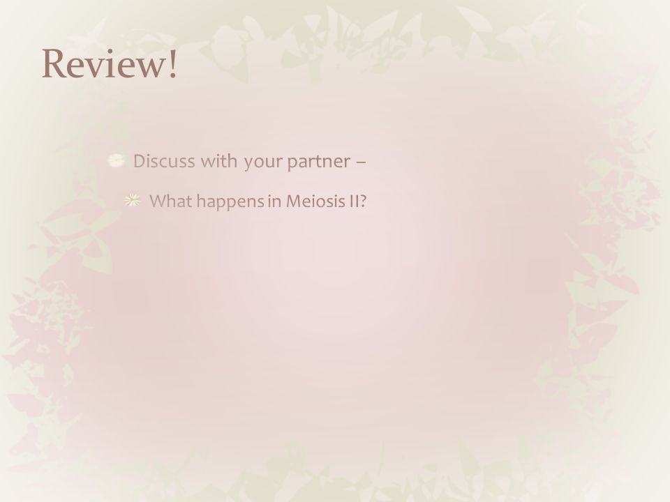 Review! Discuss with your partner – What happens in Meiosis II