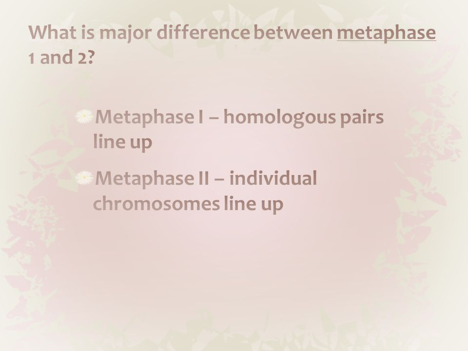What is major difference between metaphase 1 and 2