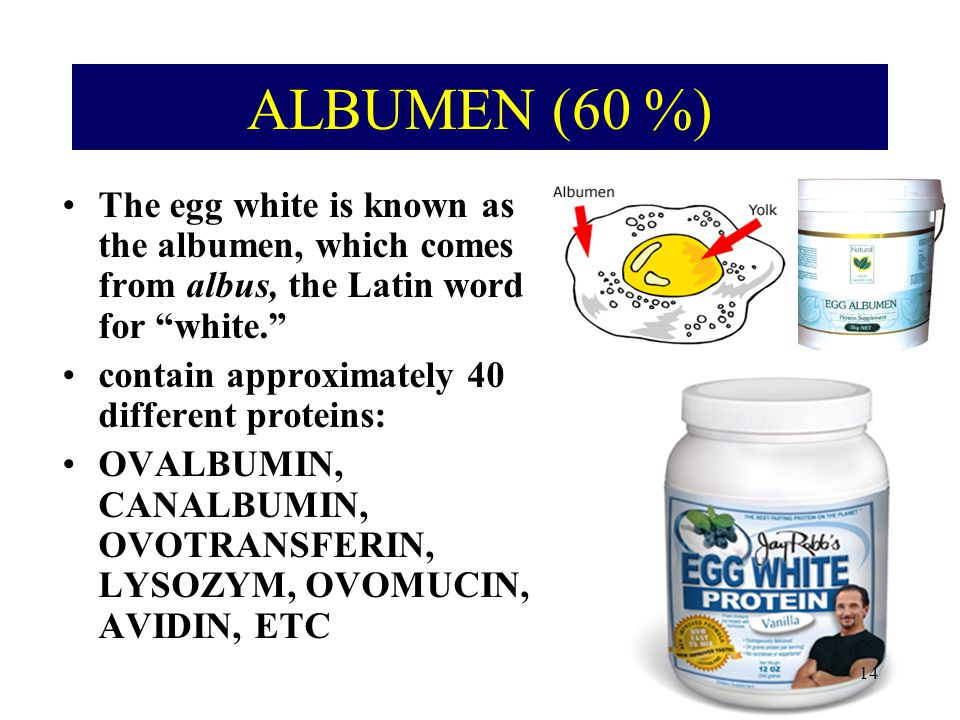 ALBUMEN (60 %) The egg white is known as the albumen, which comes from albus, the Latin word for white.