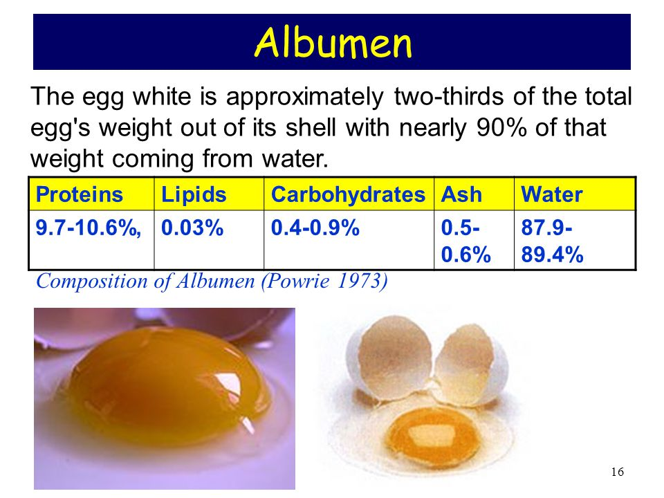 Albumen The egg white is approximately two-thirds of the total egg s weight out of its shell with nearly 90% of that weight coming from water.